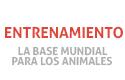 Entrenamiento y la formación de los animales